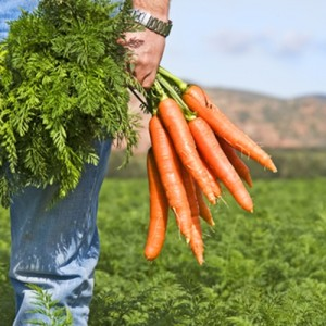 Buy local, organic food to be up on culinary trends.