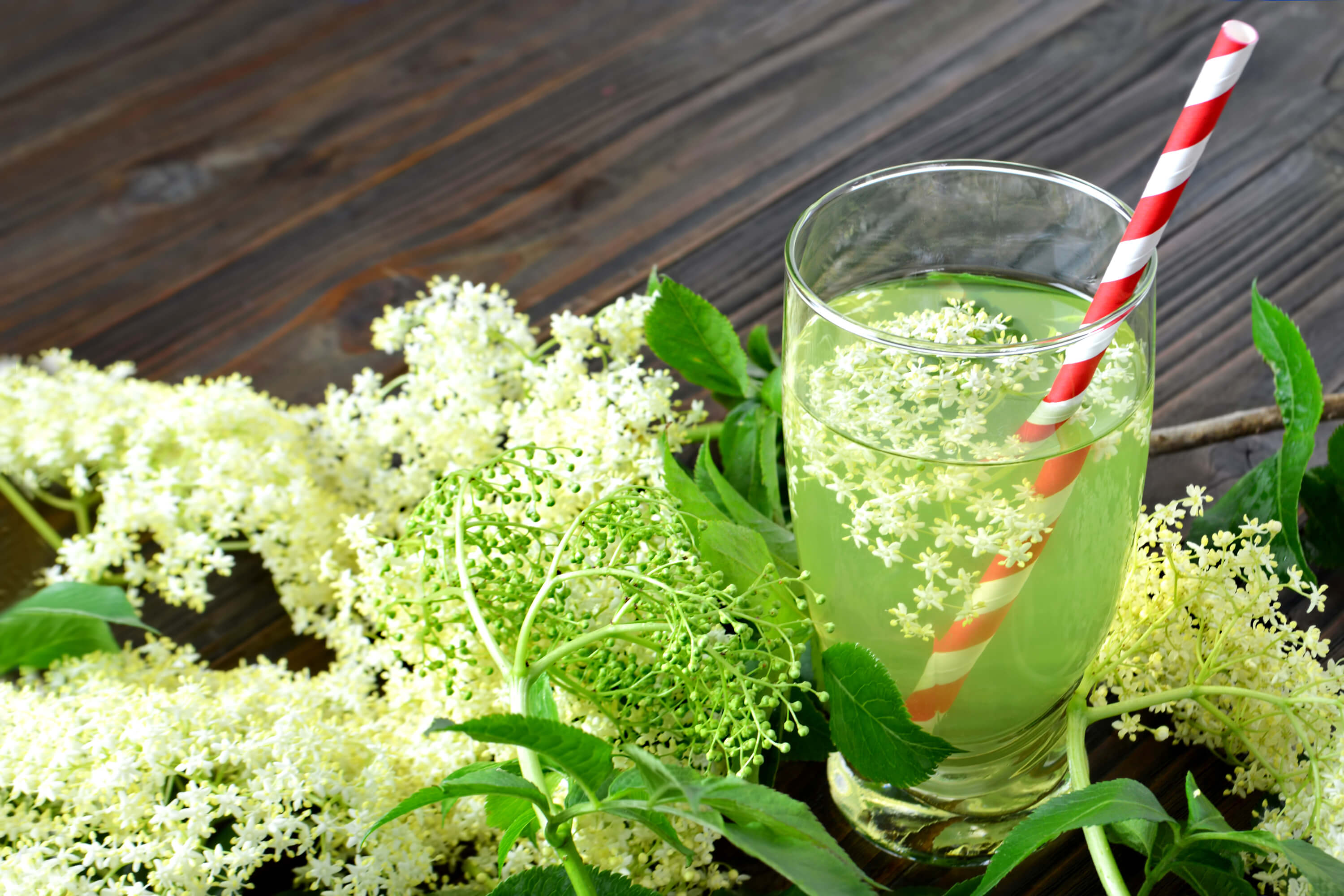 Using Elderflower in Your Food and Drinks